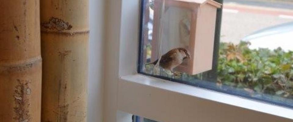 Ontdekhoek vogelhuisje