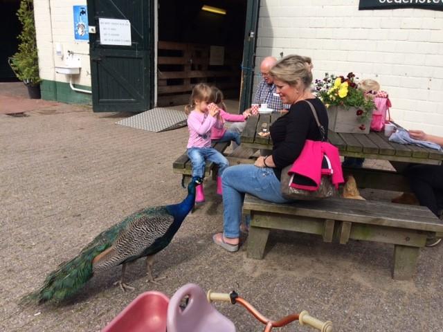Foto kinderboerderij